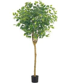 人工観葉植物 フェイク グリーン大型 光触媒スプレープレゼント 180cm ラウンドフィカスツリー(ナチュラルトランク) [LETR7641] 造花 インテリア 代引決済不可