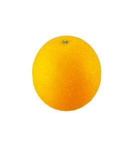 85mm オレンジ 食品サンプル フルーツ 果物 [DIFV71003]【みかん ミカン フェイク フルーツ 商品 サンプル 作り物 レプリカ モチーフ】