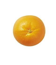 80mm フレッシュオレンジ [ONSDIFV7993]  フェイクフード 食品サンプル レプリカ ディスプレイ デコレーション 作り物 装飾 飾付 飾り 小物 イベント パーティー 店舗装飾 飾り付け テーブルコーディネート フルーツ 果物 オレンジ みかん ミカン