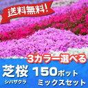 ※送料無料※シバザクラ芝桜3カラー選べる150ポットミックスセット