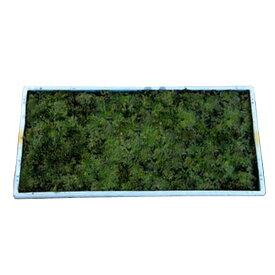 スナゴケ (砂苔) マット 58cm×28cm 単品 グランドカバー 苔庭 テラリウム