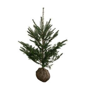 もみの木 (ウラジロモミ) 樹高1.0m前後 (根鉢含まず) クリスマスツリー 常緑 庭木