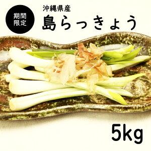 【送料無料・即発送可】沖縄県産 島らっきょう5kg(土付き)食べ方説明書付き国産 ラッキョウ らっきょう