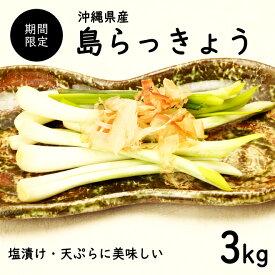 【送料無料・即発送可】沖縄県産 島らっきょう3kg(土付き)食べ方説明書付き国産 ラッキョウ らっきょう