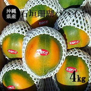 【送料無料】沖縄産フルーツパパイヤ4Kg (6玉〜10玉)石垣珊瑚