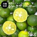 【送料無料】沖縄産青切シークワーサー果実・シークワァサー果実・シークヮサー果実・シークアーサー果実9kg(240〜48…