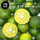 【送料無料】沖縄産シークワーサー 果実1.5kg(40〜80玉前後)