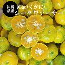 【送料無料】沖縄産シークワーサー 果実1.5kg(40〜80玉前後)(黄金)