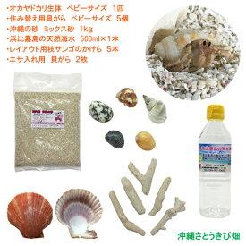 オカヤドカリ飼育セット ベビーサイズ(生体×1匹・貝殻・砂×1袋・海水×1・ヒオウギ貝×2枚・枝サンゴ5本)