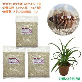オカヤドカリ飼育セット SSサイズ(生体×1匹・砂×3袋・アダンの鉢植え×1)