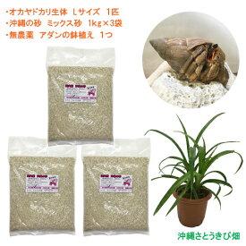 オカヤドカリ飼育セット Lサイズ(生体×1匹・砂×3袋・アダンの鉢植え×1)