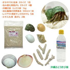 オカヤドカリ飼育セット Sサイズ(生体×1匹・貝殻・砂×1袋・海水×1・二枚貝×2枚・枝サンゴ5本)