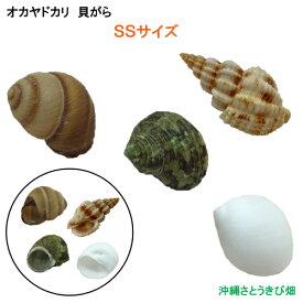 オカヤドカリ用貝がら SSサイズ 4個