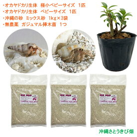 オカヤドカリ飼育セット 極小ベビーサイズ&ベビーサイズ(生体×2匹・砂×3袋・ガジュマル苗×1)