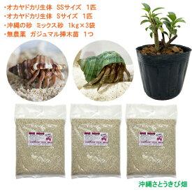 オカヤドカリ飼育セット SSサイズ&Sサイズ(生体×2匹・砂×3袋・ガジュマル苗×1)
