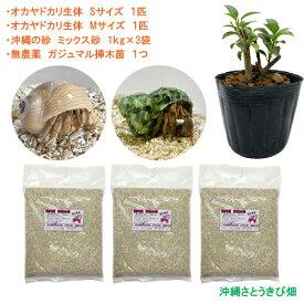 オカヤドカリ飼育セット Sサイズ&Mサイズ(生体×2匹・砂×3袋・ガジュマル苗×1)