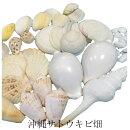 貝殻(貝がら)セット白色系40個入