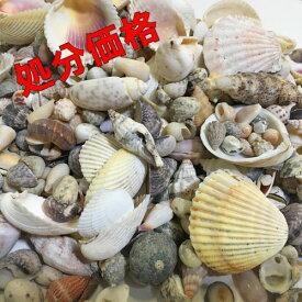【送料無料】処分価格 訳あり B級品 貝殻(貝がら) 5kg