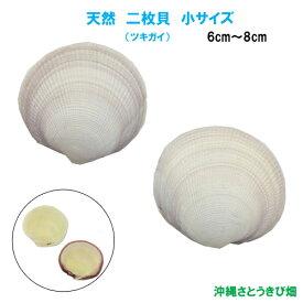 天然 二枚貝(ツキガイ) 小サイズ(6cm-8cm)
