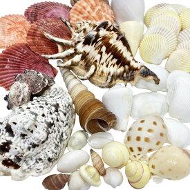 貝殻(貝がら)セット40個 シェルミックス