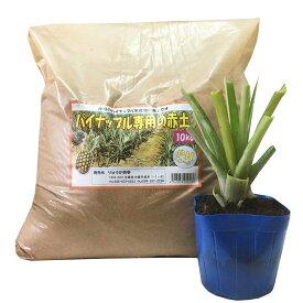 パイナップル専用赤土10kgとボゴール(スナックパイン苗)セット
