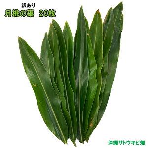 【訳あり】沖縄産 月桃の葉20枚セット(未洗浄)