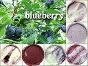 無農薬ブルーベリーを使った特選ジェラートセット6種×各2=合計12個入ご自宅用簡易包装でのお届けです。ギフトでご利用の方は箱代300円追加となります。
