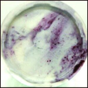 ブルーベリーマルモ(パンナ&ブルーベリージャム)完全無農薬ブルーベリー使用