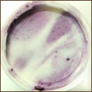 ミルティロヨーグルト(ブルーベリークリーム&ヨーグルトジェラート)完全無農薬ブルーベリー使用