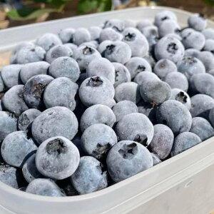 無添加 冷凍ブルーベリー 2kg ブルージェイ 冷凍果 フルーツ 北海道 農園直送 自然栽培 ハウレット農園