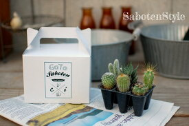 【サボテン・多肉植物 6種類/SABOTEN BOX】