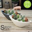 【サボテン 多肉植物 5種類 寄せ植え/ ウェーブポット M】/ サボテン 多肉植物 ミニサボテン 観葉植物 インテリア オシャレ かわいい…