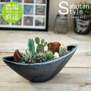 【サボテン 多肉植物 6種類 寄せ植え/ ウェーブポット L】/ サボテン 多肉植物 ミニサボテン 観葉植物 インテリア オシャレ かわいい…