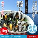 Mussel01 1k