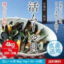 Mussel01 4k