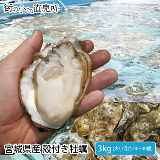 Unshelled 活牡蠣 3 kg from Miyagi ※Year-end present gift gourmet by big things and small things mixture at the persimmon oyster year-end present gift end of the year for approximately 20-30 heating