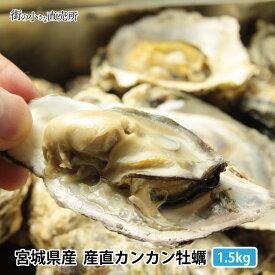 送料無料! 三陸産地直送 旬の時期に急速冷凍したカンカン牡蠣1,5kg 冷凍のままコンロでできたて蒸し牡蠣が完成 カキ かき 三陸