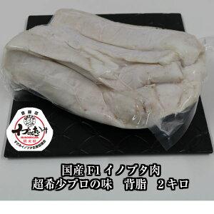 \F1イノブタ 背脂 2キロ ブロック/和歌山県 すさみ産 イブの恵み●業務用・プロ・ラーメン・隠し味・レストランご用達●極上の脂で料理の腕が上がります。ラードも作れる!