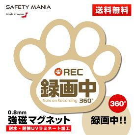 【SAFETY MANIA】録画中 肉球 車用 強磁マグネットステッカー ベージュ 12cm×11cm ドライブレコーダー搭載車両 あおり運転防止に 犬 猫 好きな方へ
