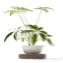 「Tidyプランタブル」全3色【植木鉢トレー観葉植物ティディテラモトグリーン植物植物キャスター付鉢置き台水受けリビングバルコニー玄関】