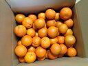 <予約販売>【送料無料】種子島産たんかん、サイズ混合・10Kg<ご家庭用>
