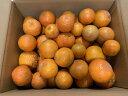 <予約販売>種子島産たんかん、サイズ混合・10Kg<ご家庭用>・送料無料