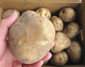 北海道から届きました!!!デッカイばれいしょ【3kg】◎2L、3L◎馬鈴薯◎じゃがいも◎大きいバレイショ◎ポテト◎