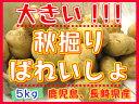 【期間限定】長崎県から届きました!!!デッカイ!!秋掘りばれいしょ【5kg】3L、2Lサイズ新じゃが●新馬鈴薯●長崎県産●大きいじゃがいも●ポテト●