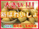 【期間限定】九州から届きました!!!デッカイ!!新ばれいしょ【5kg】3L〜2Lサイズ新じゃが●新馬鈴薯●鹿児島産●大きいじゃがいも●ポテト●