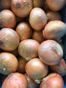 【大きい!!!】淡路島の玉ねぎ10kg【送料無料】玉葱(たまねぎ・玉ねぎ・タマネギ)◎大きいサイズ◎