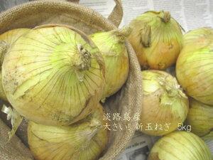 【大きい!!!】淡路島の新玉ねぎ5kg【送料無料】新玉葱(たまねぎ・玉ねぎ・タマネギ)◎大きいサイズ◎