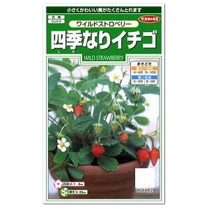 サカタのタネ 四季なりイチゴ ワイルドストロベリー 種 (ハーブ 多年草 プランター栽培可 家庭菜園 たね 種子 いちご)