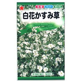 大人気!トーホク 白花かすみ草 種 (一年草・花壇・プランター・切花・たね・ガーデニング)