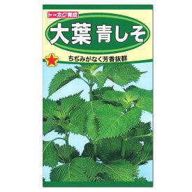 トーホク 大葉青しそ 種 生産地:栃木県(家庭菜園 紫蘇 シソのタネ たね 緑黄色野菜 青じそ)